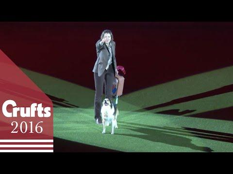 Freestyle Heelwork To Music Competition Winner | Crufts 2016