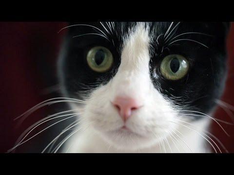 Friskies Cat Questions: Christmas
