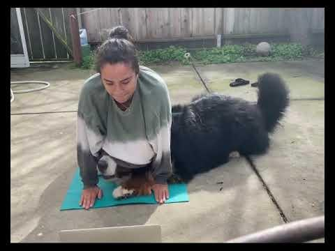 Woman is attempting to do yoga, but her dog won't let her. #Video