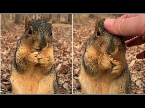 wow so cute squirrel | Squirrel's soft fur video