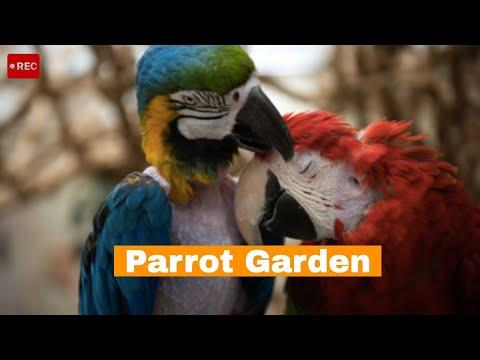Lovebird Macaws in Parrot Garden at Best Friends Animal Sanctuary