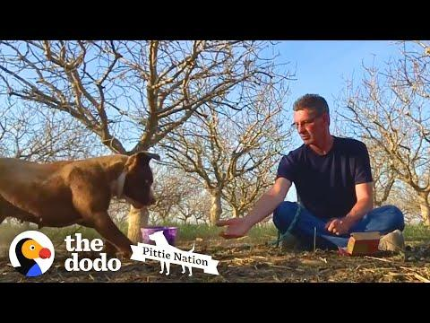 Patient Man Takes 4 Months to Rescue Abandoned Mama Pittie | The Dodo Pittie Nation