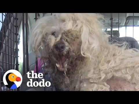 Stray Dog Looks Like A Totally Different Dog Now #Video