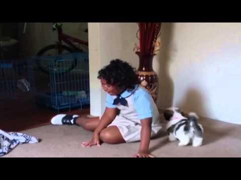 Girl Comes Home To A Puppy Surprise