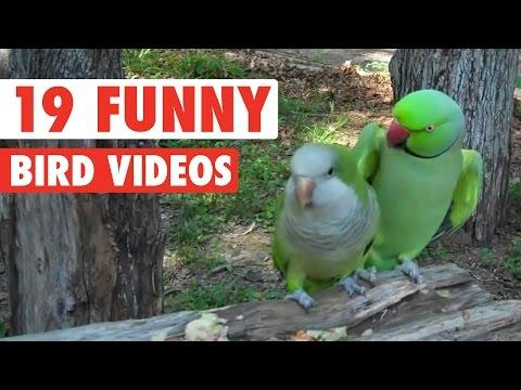 Funny Birds Compilation