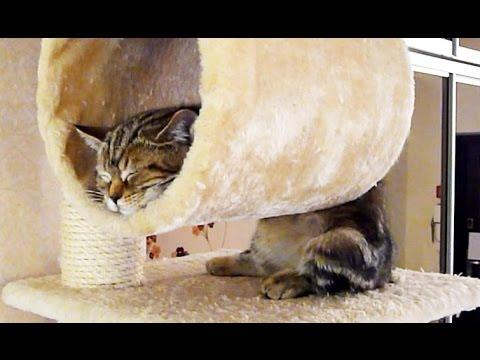 Funny Cats Sleeping In Weird And Cute Positions