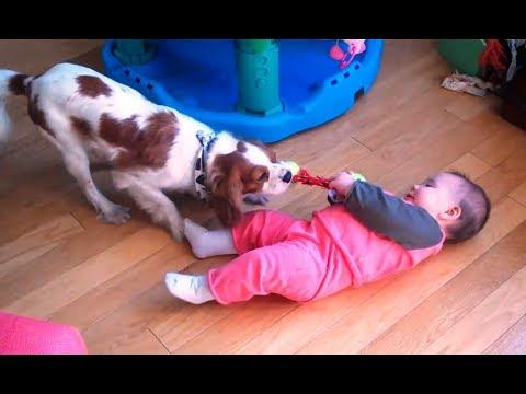 Baby and Dog Tug of War -  Funny Babies and Dogs playing together