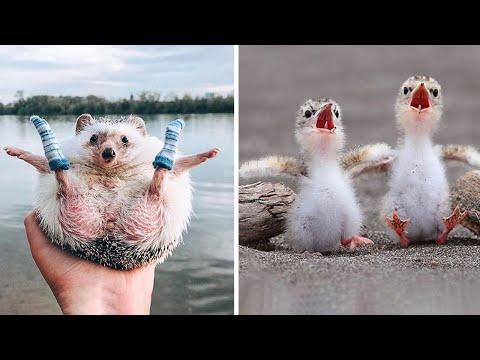 Cute baby animals Videos Compilation cutest moment of the animals - Soo Cute! #22