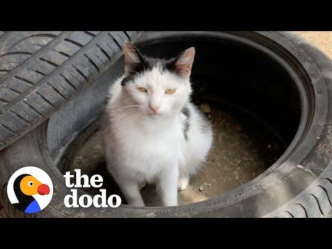 Stray Cat Waits For This Guy At Work Every Morning For 2 Years #video