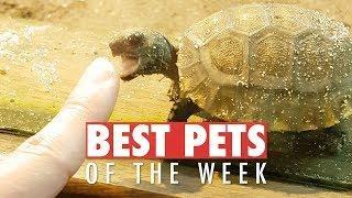 Best Pets of the Week | May 2018 Week 4