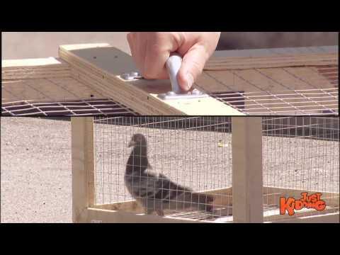 Set The Bird FREE - Kids Prank!