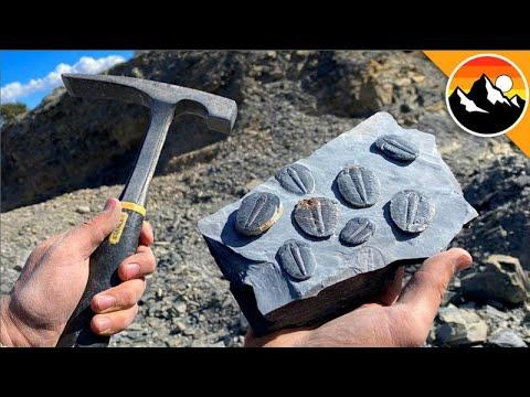 Digging Up 500 Million Year Old Trilobites Video!