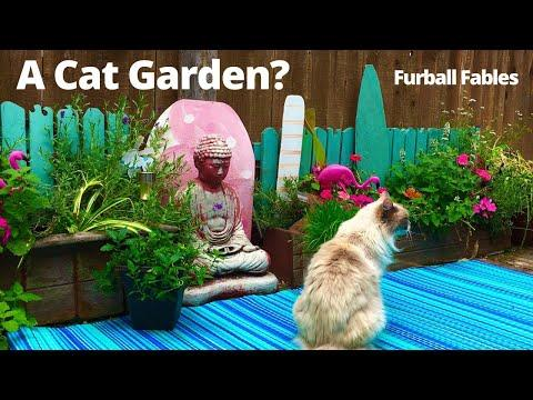 How to Create a Cat Friendly Garden Video