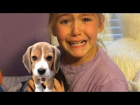 Best New Puppy Surprise For Kids Compilation Video - Try Not to Cry