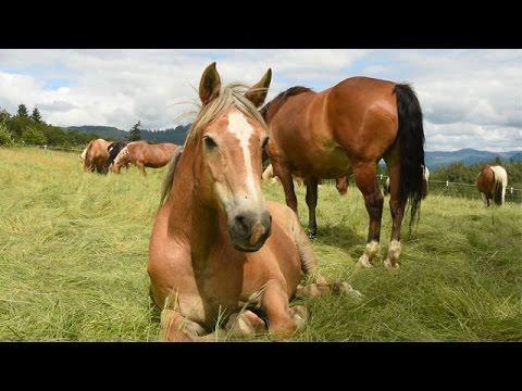 Rescued Horses Lovin' Life At Oregon Sanctuary