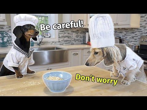 The Dogs Make Breakfast in Bed for Mum & Dad Video... (and Make a Mess!)