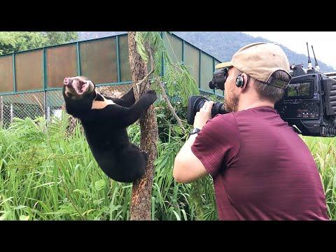 Filming Baby Sun Bears Is NOT Easy Video! | Bears About The House | BBC Earth