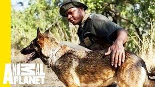 Pup on Patrol: How Anti-Poaching Dogs Aid in Conservation