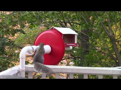 A True Anti-Squirrel Bird Feeder That Works #Video