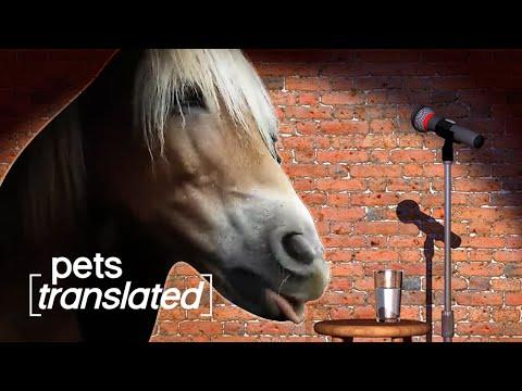 Animals Got Talent Video | Pets Translated
