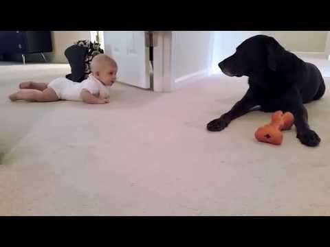 Baby's First Crawl With Her Dog Has Cutest Ending Ever