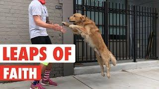 Leaps of Faith | Funny Animal Jumps Compilation