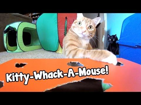 Kitty-Whack-A-Mouse!