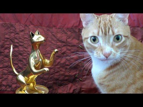 If Your Cats Won Movie Awards!