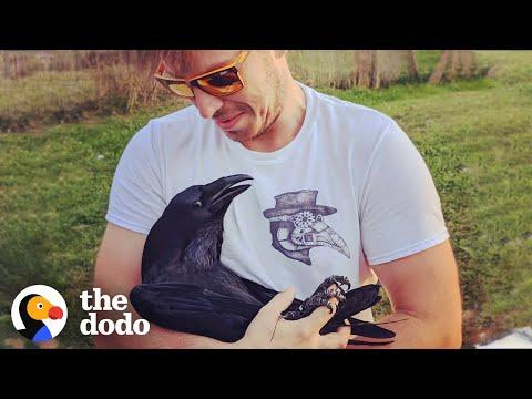 Raven Shakes His Tail Feathers Every Time He Sees Dad   The Dodo