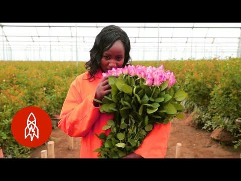 Enter Kenya's Rose Oasis