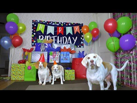 Dog Gets Biggest Birthday Surprise Party Ever Video! Cute Dogs Penny & Potpie Throw Party for Maymo