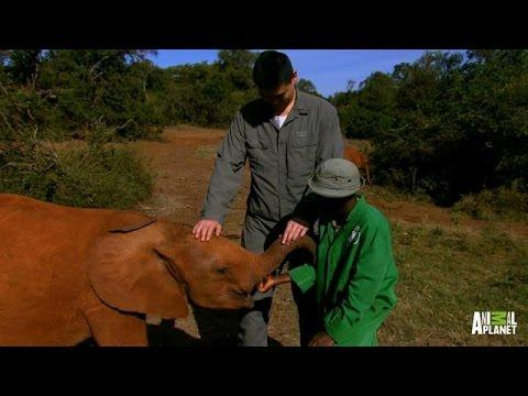 Traumatized Baby Elephants Find New Human Parents