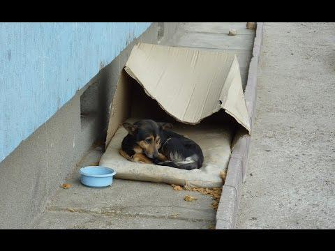 Homeless Dog Living In A Cardboard Box Gets Rescued And Needs A Home For A Happy Ending Story