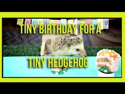 Tiny Birthday For A Tiny Hedgehog