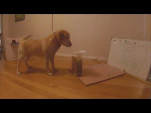Labrador Uses The Archimedes Principle To Get His Soup