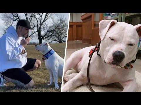 Man Learns Sign Language For His Rescued Deaf Puppy #Video