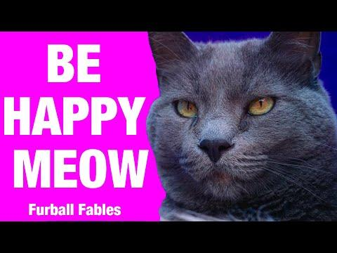 Think Pawsitive Be Happy Meow Video