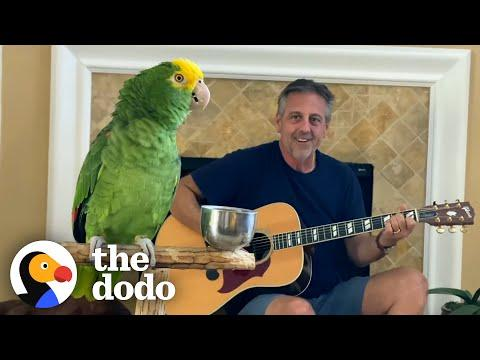Parrot Insists On Singing Whenever Dad Plays Guitar #Video