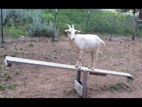 Goats On Teeter Totters - Compilation