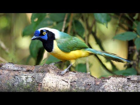 Aves del Ecuador Video
