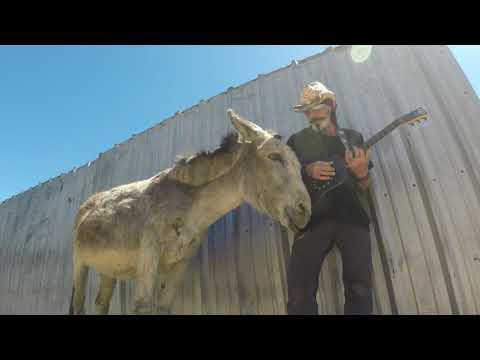 Hazel the Donkey Don't Let Me Down Now Video