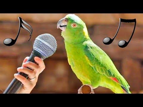 Funny Birds Imitate Dinosaur Machine Gun iPhone Cat Dog Alarm