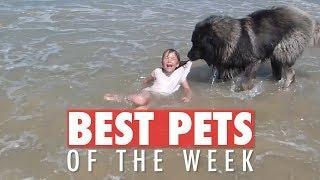 Best Pets of the Week   August 2018 Week 3