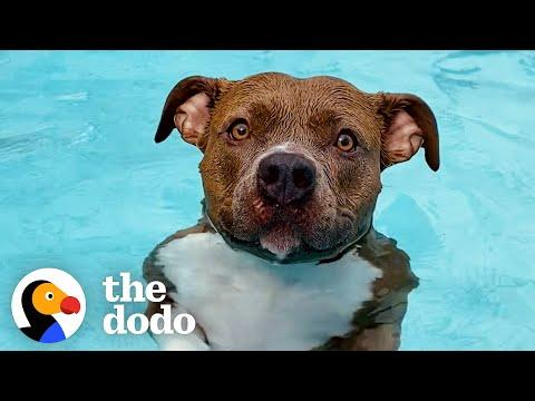 Pittie Must Be In The Pool At All Times Or Else She Gets So Sad #Video