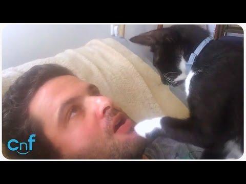 Cat Dentist L Meow Open Wide