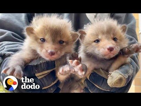 7 Baby Foxes Reunite With Mom After Being Pulled from Under a Deck