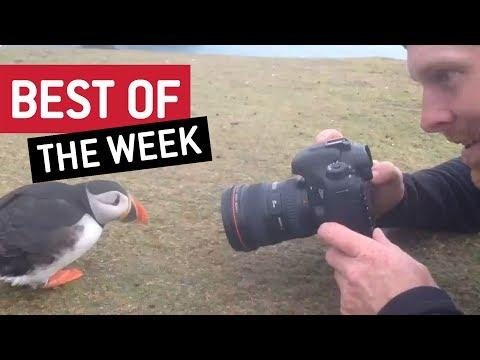 Best Of The Week - Oh Hello There