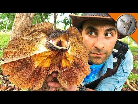Catching a Frilled Dragon! Brave Wilderness