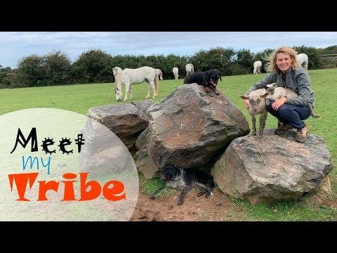 MEET ALL MY ANIMALS! Horses, Ponies, Donkeys, Cats, Dogs & a few others! THE WHOLE TRIBE!