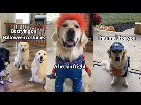 Dog Tries On Different Halloween Costumes Video | Which One Should He Wear For Halloween?
